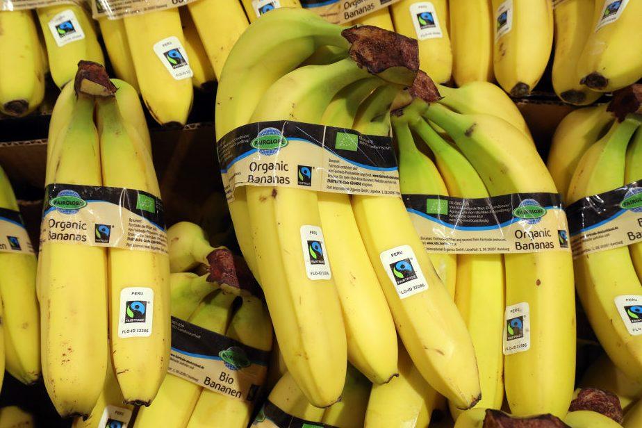 A Tropical Fungus Could Make Bananas Go Extinct