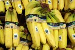 A Tropical Fungus Could Make Bananas Go Extinct