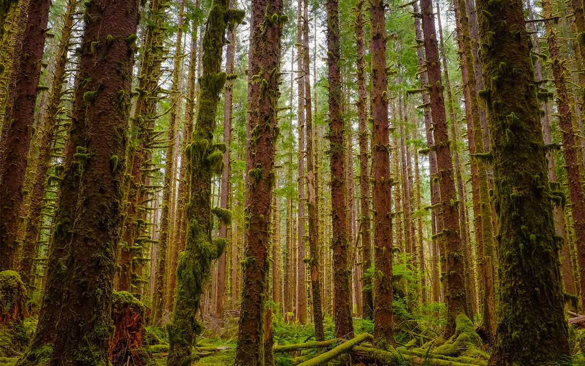 Trump Executive Order National Forests