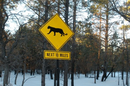 Mountain lion sign