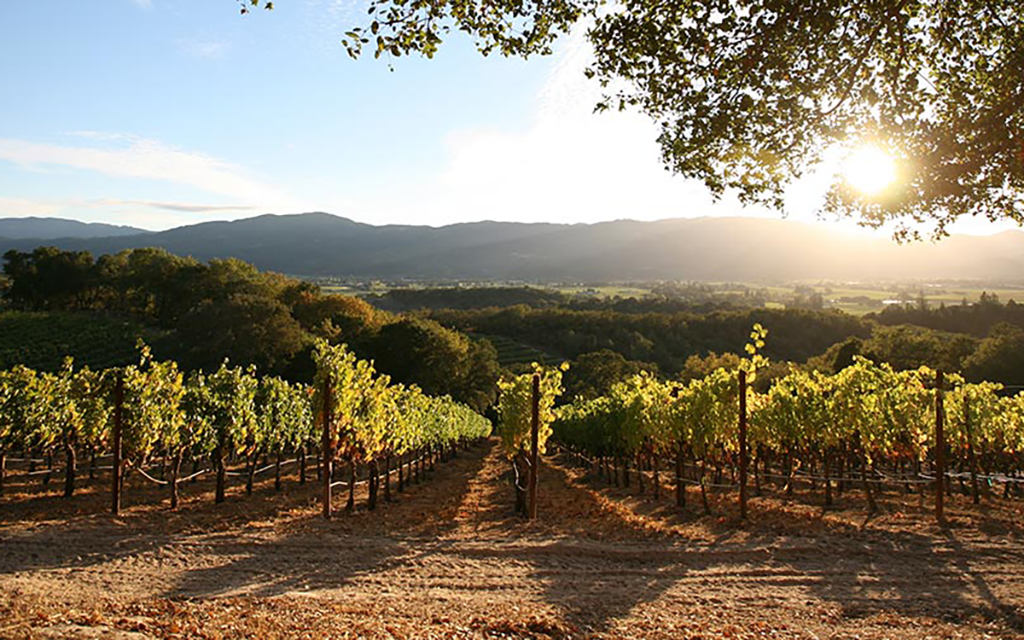 5 Plans for a Most Perfect Napa Weekend, Because Harvest Season