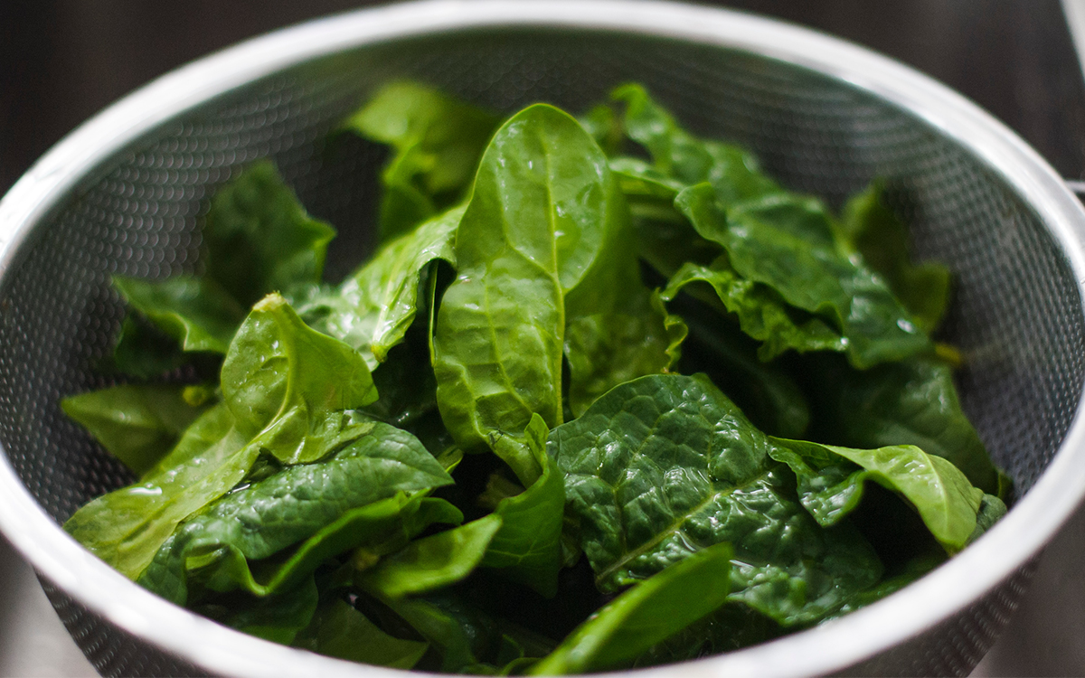 The Benefits of Plant Protein