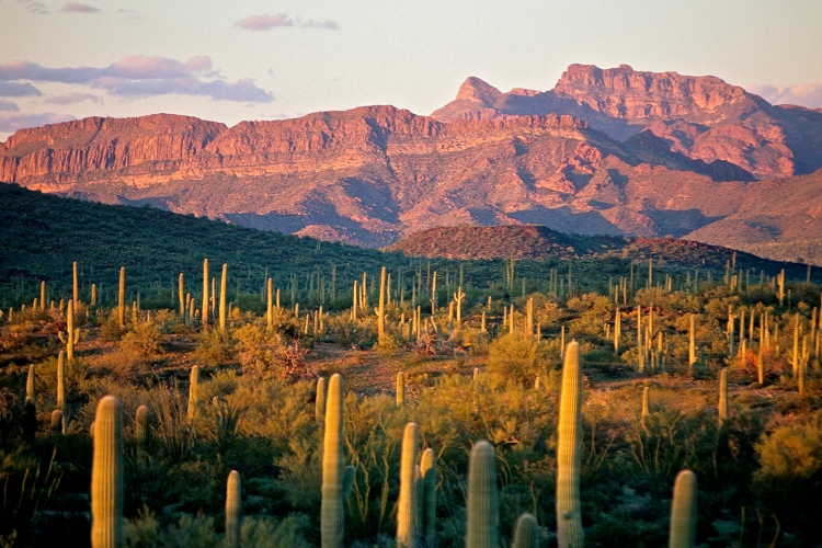 Organ Pipe Cactus National Monument in Arizona