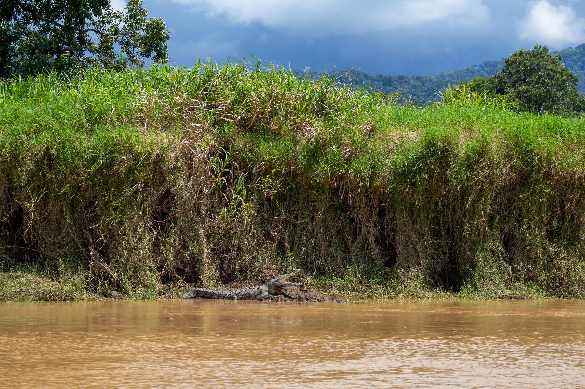 costa rica crocodile safari