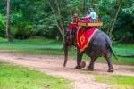 ankor elephant rides