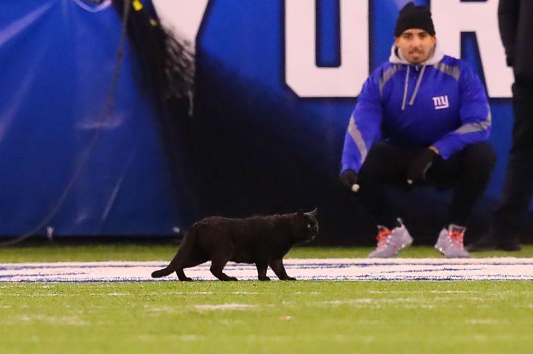 "Black Cat on Field Spooks Giants as Cowboys Win on ""Monday Night Football"""