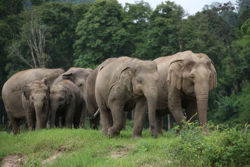 chiang mai elephant nature park