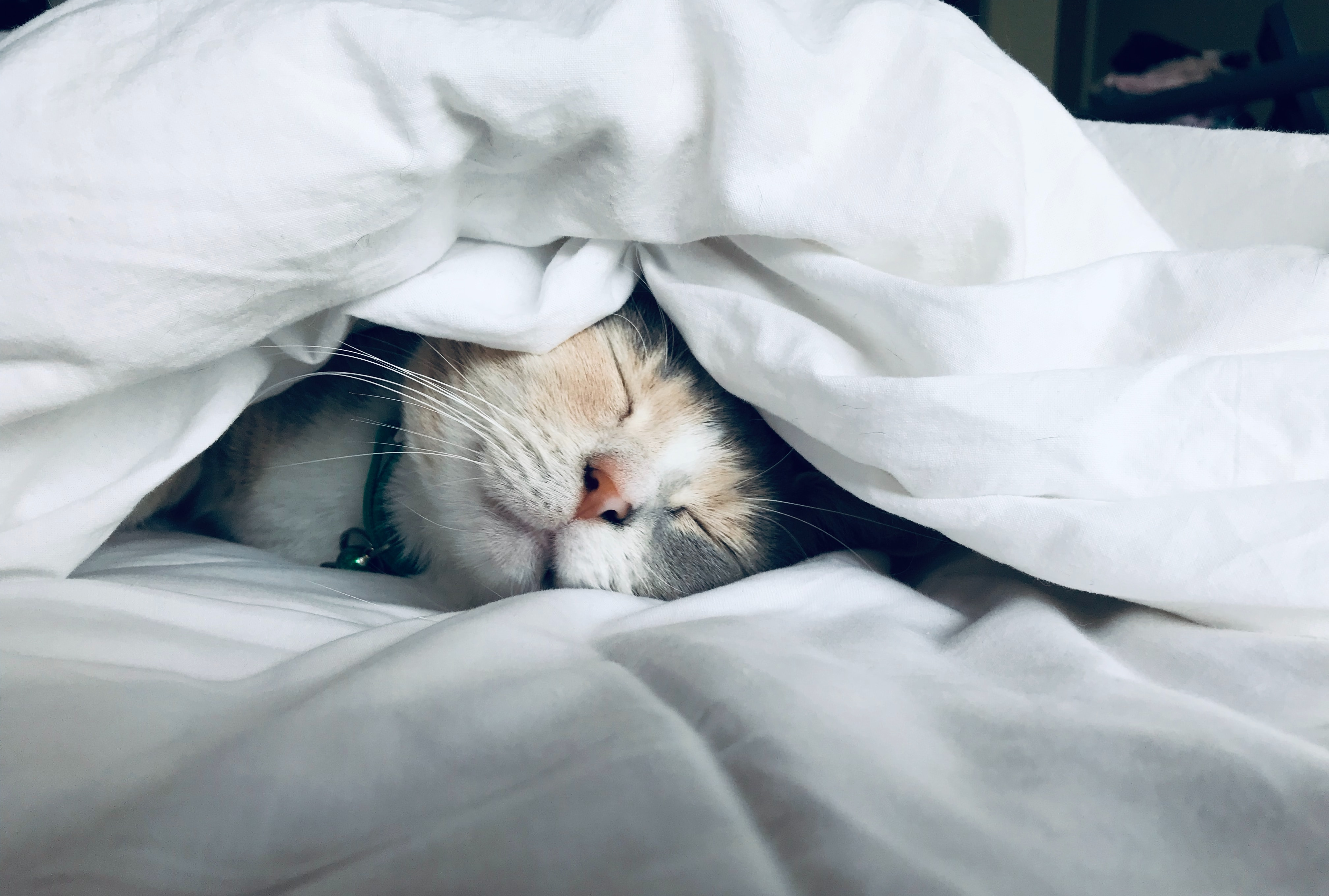 The Scientific Argument for Sleeping in the Cold - InsideHook