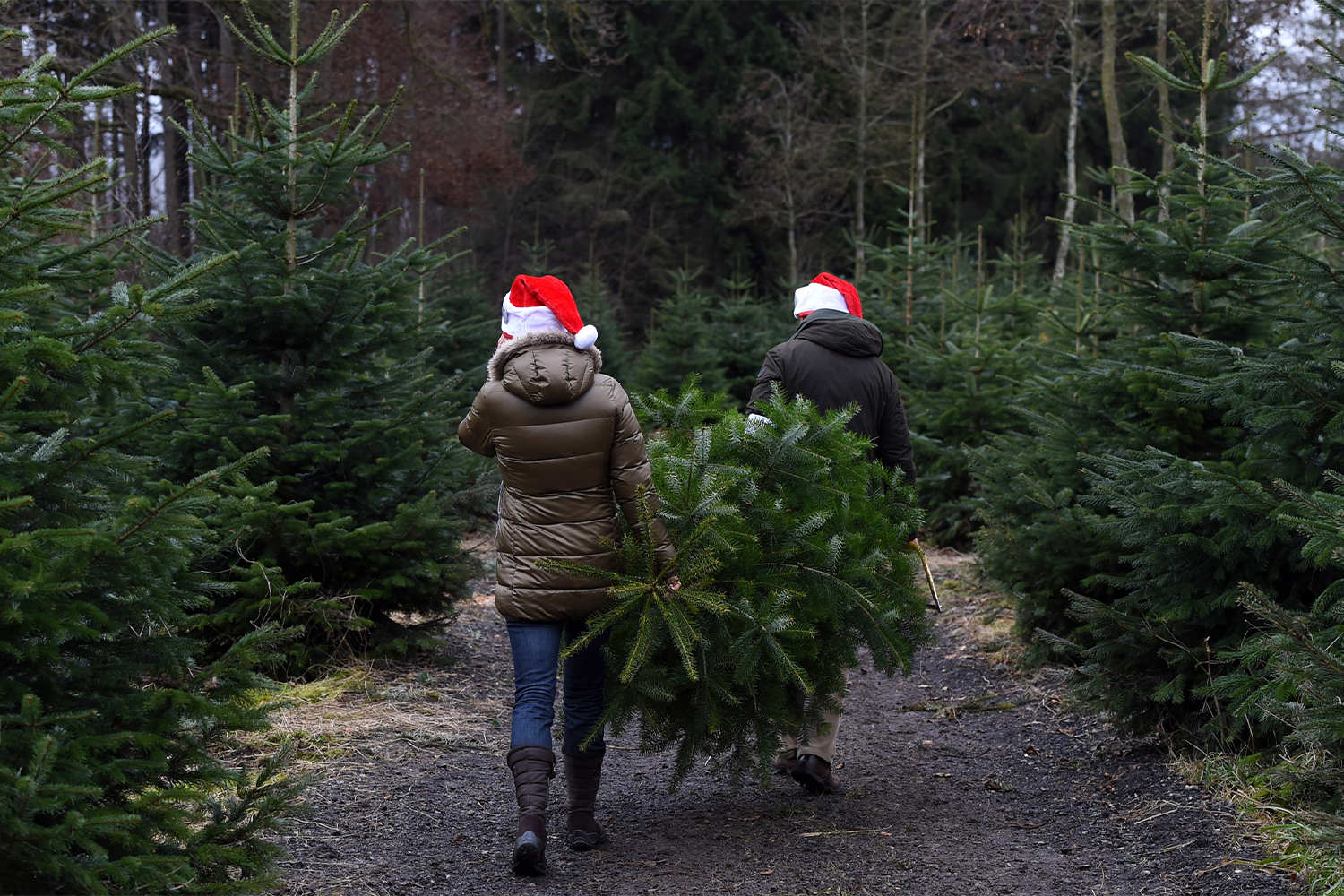Are Baby Boomers Killing the Christmas Tree?
