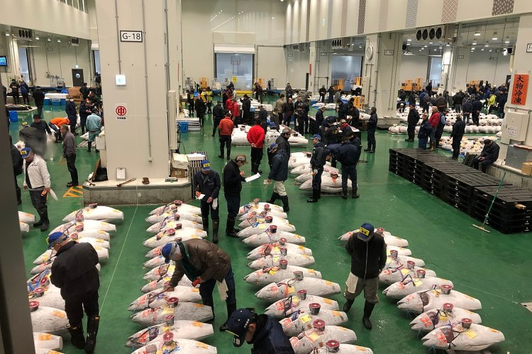 Bluefin Tuna Sells For $1.8 Million at Auction in Tokyo