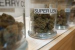 Cannabis strains in jars at a marijuana dispensary