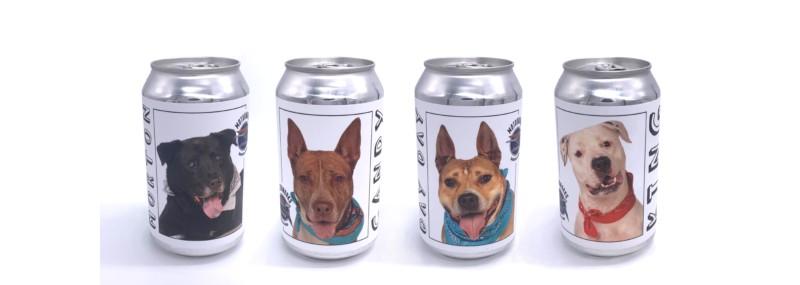 Adoptable Dog Cruiser cans