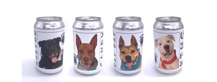Florida's Motorworks Brewing Features Adoptable Dogs on Cans