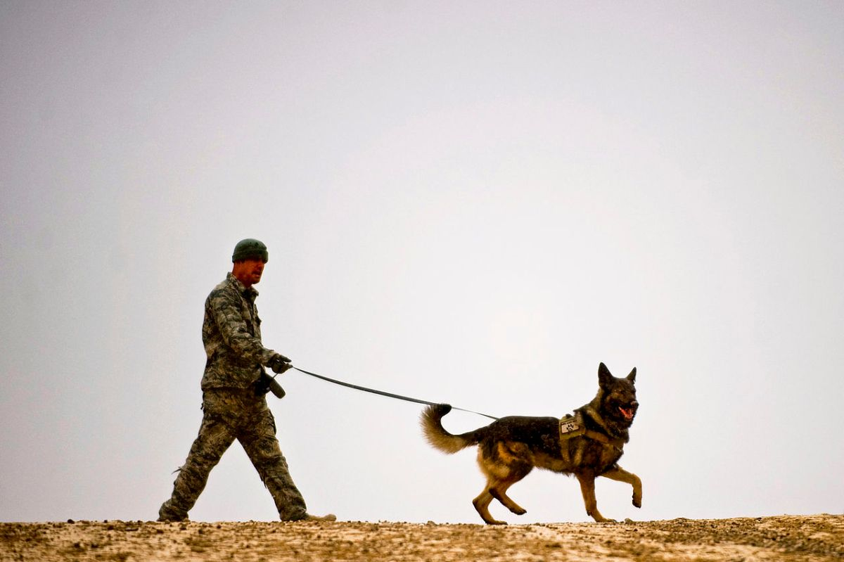 Army dog on a leash