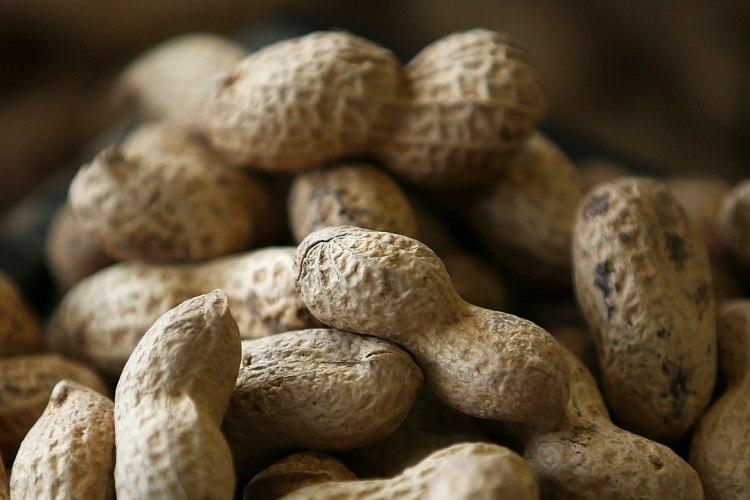 FDA Approves Palforzia to Treat Peanut Allergies