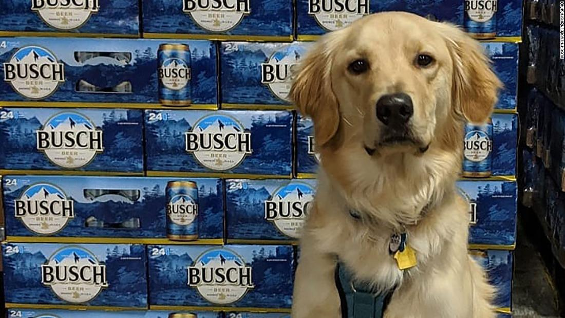Foster a dog, get a month's supply of beer.