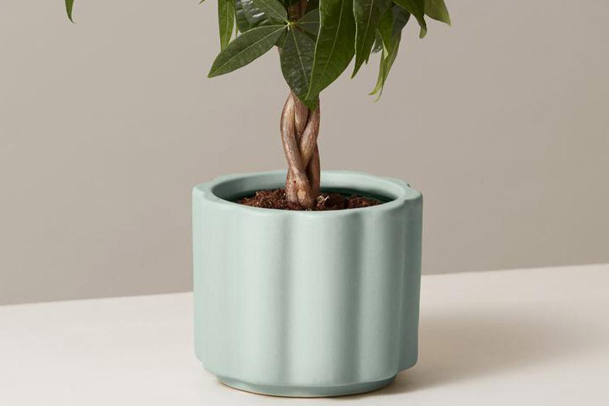 Balboa planter