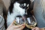 dog wine delivery