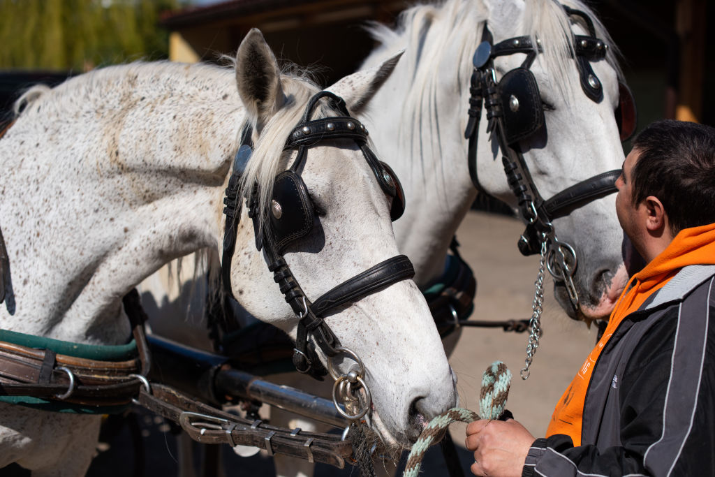 Chicago has become the latest city to ban horse-drawn carriages. (Photo by Thomas Kronsteiner/Getty Images)