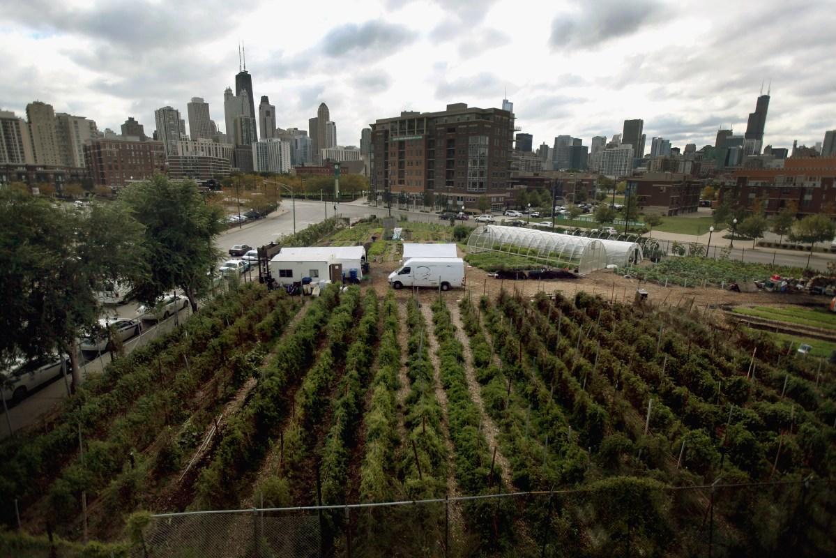 chicago farms coronavirus