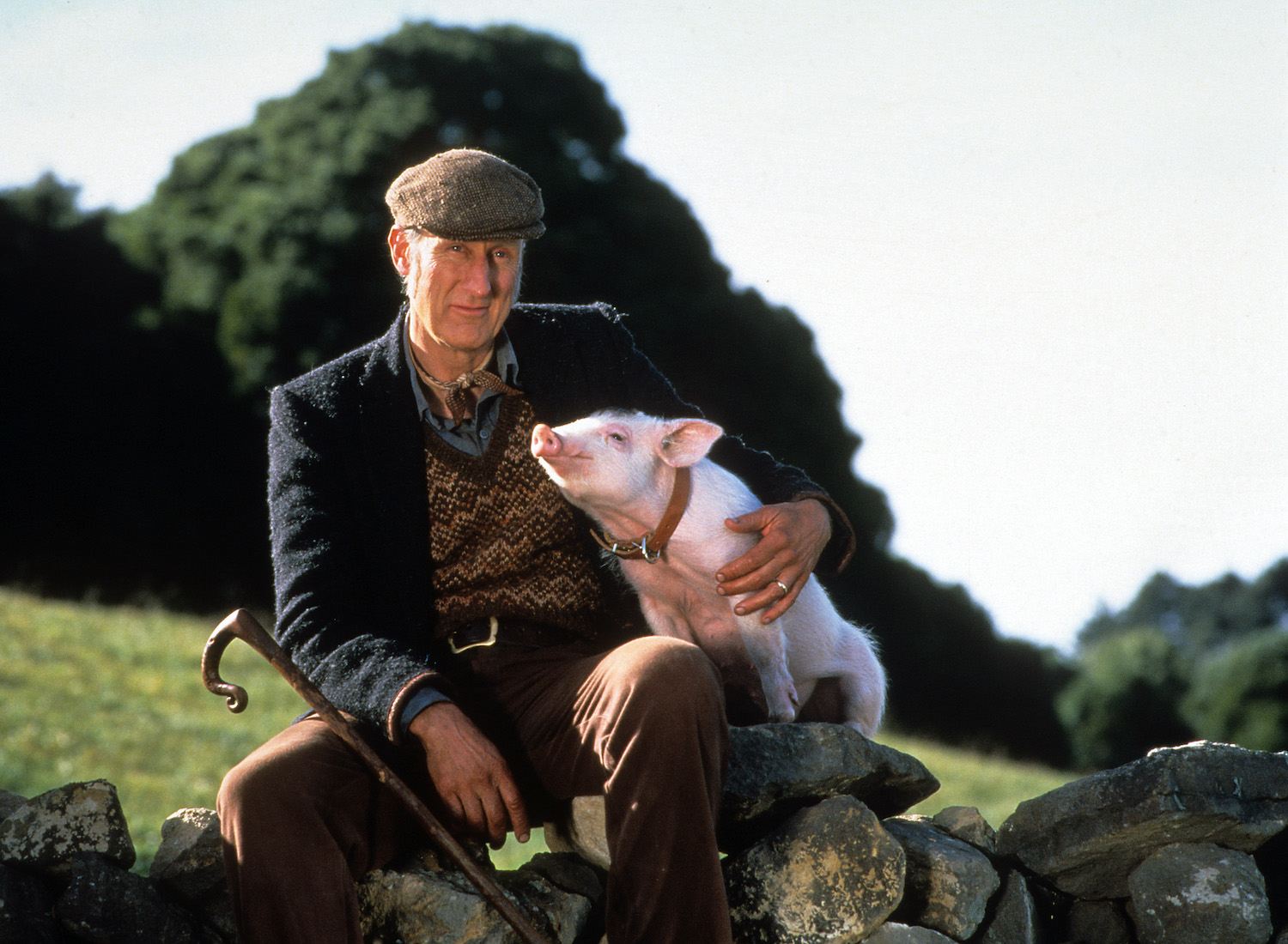 Actor James Cromwell with the pig in the movie Babe