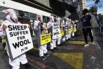 PETA wool protest