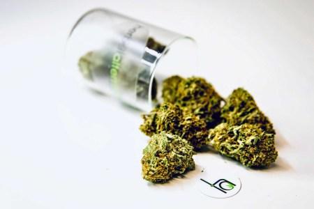 herbal alternatives strain dc