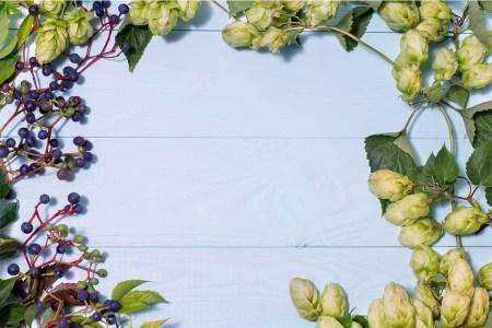 grapes hops