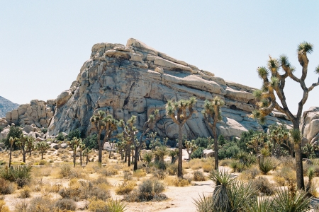 joshua tree national park reopen