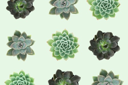 Leaf & Clay succulent plants