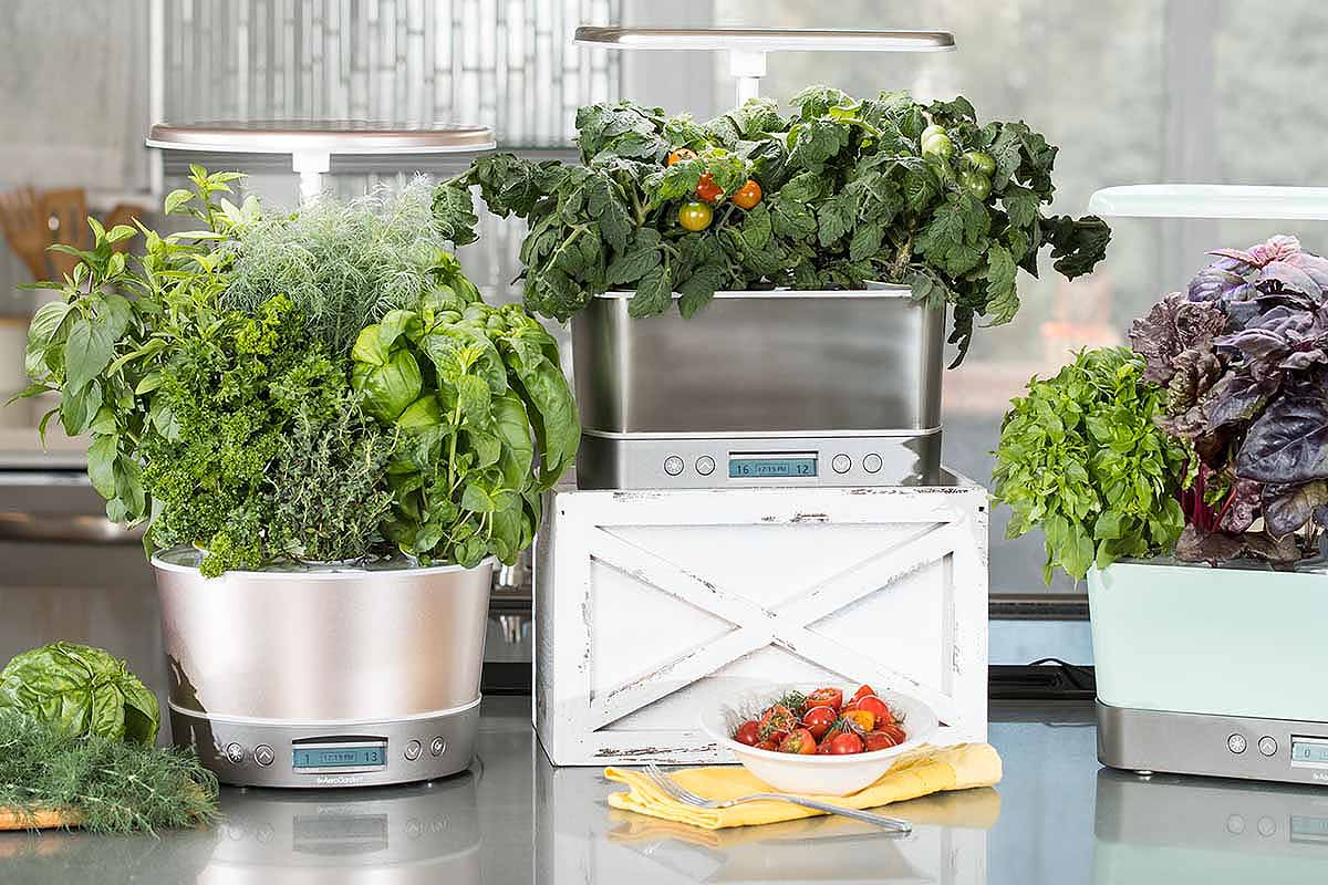 AeroGardens-Will-Provide-You-With-Year-Round-Herbs-and-Veggies