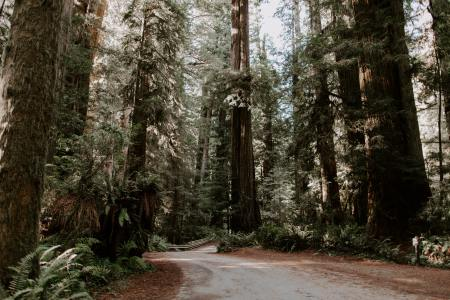 help save redwoods