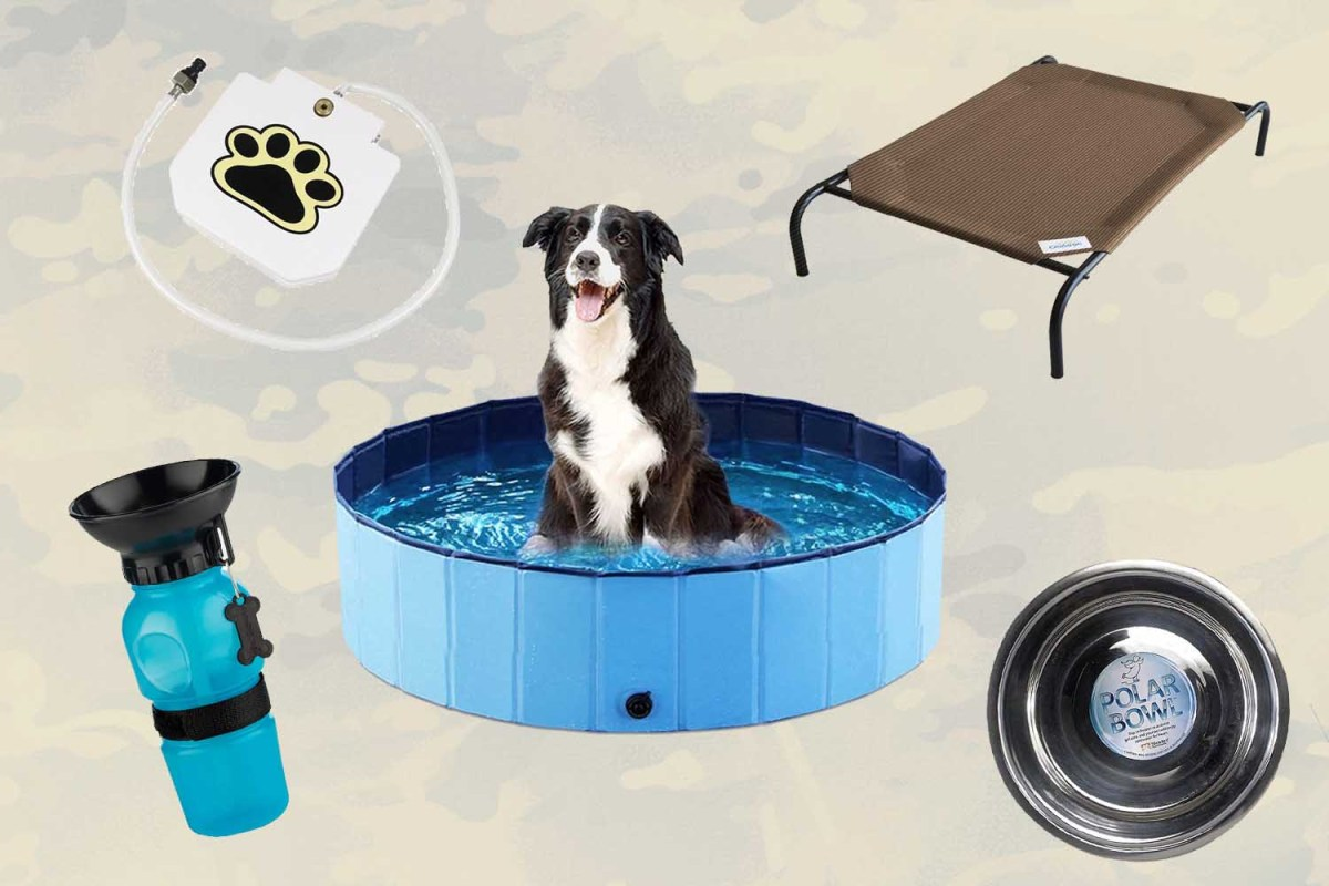 10 Items That'll Get Your Dog Through the Dog Days of Summer