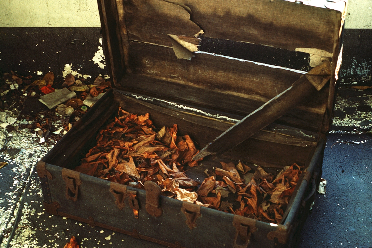 Autumn leaves in a trunk on Ellis Island in 1982, which was then abandoned