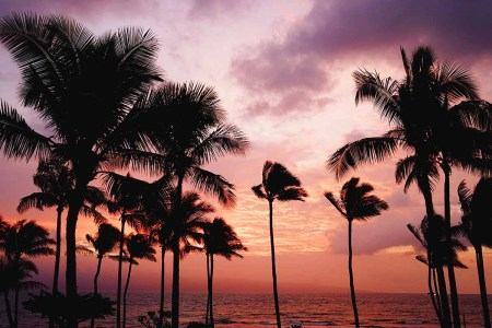 Palm trees at sunset in Hawaii