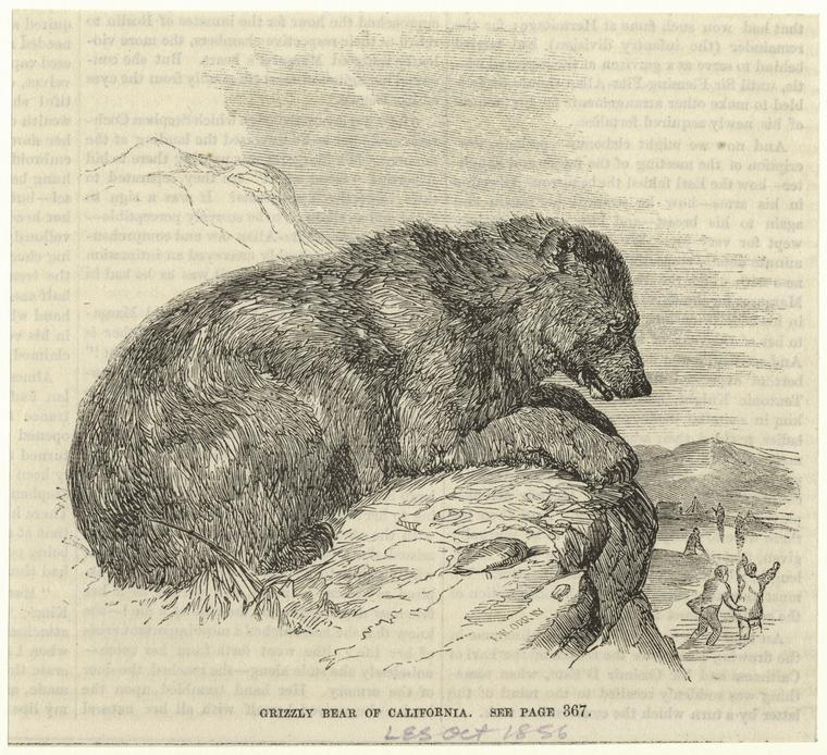 An 1865 illustration of a grizzly bear