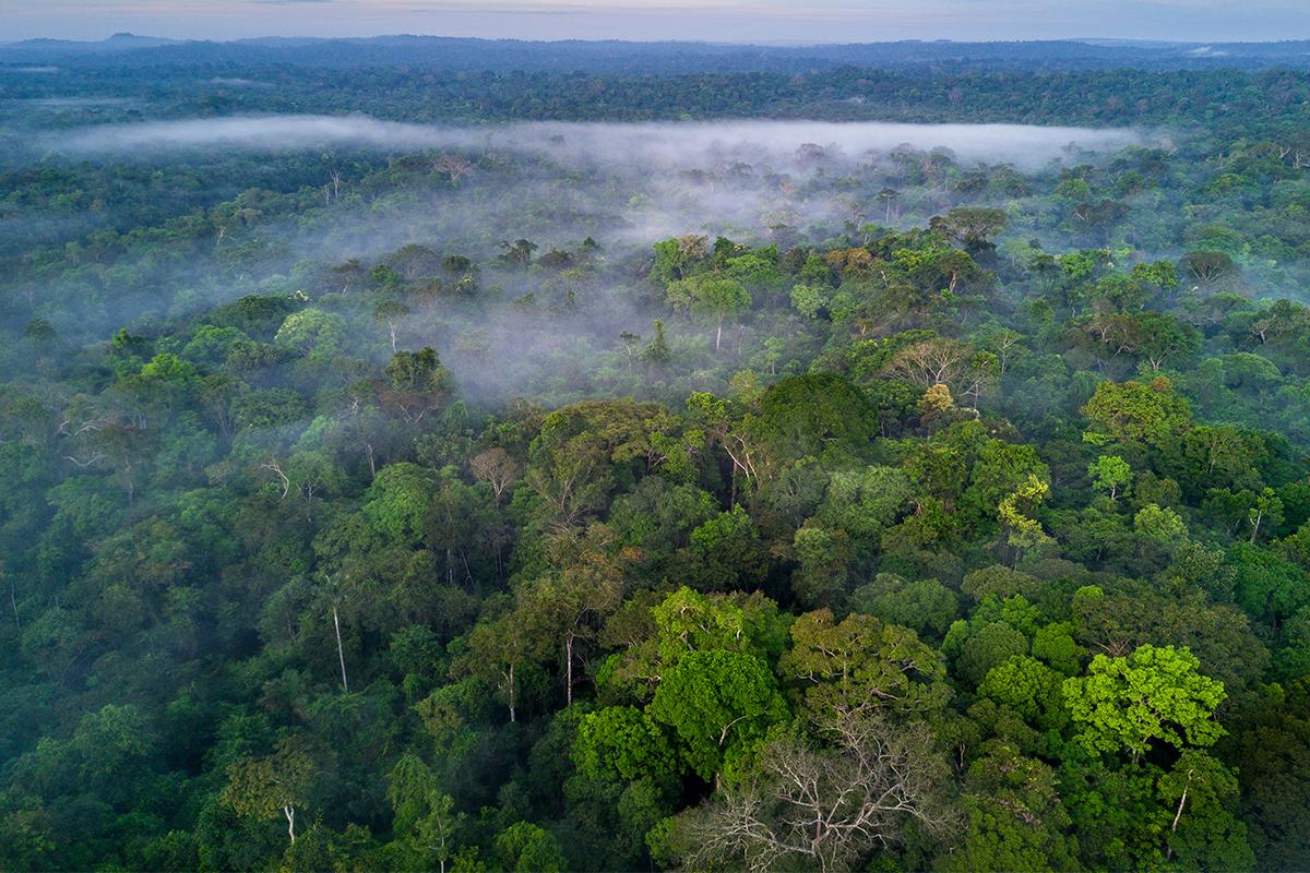 Kambo amazon frog detox