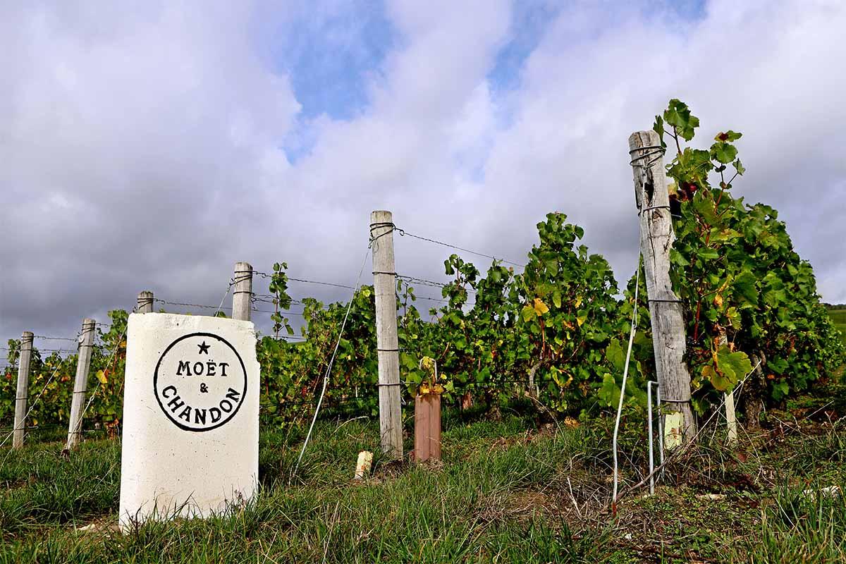 Outside the Moet vineyard
