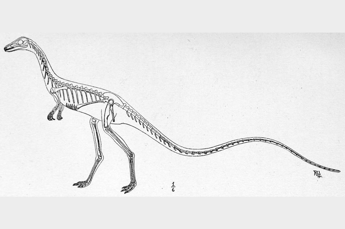 Skeletal reconstruction of Podokesaurus
