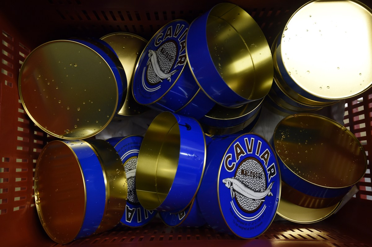 empty caviar tins