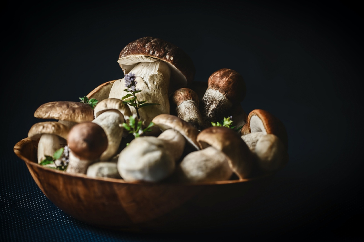 Growing Your Own Mushrooms Is Easier Than You Think