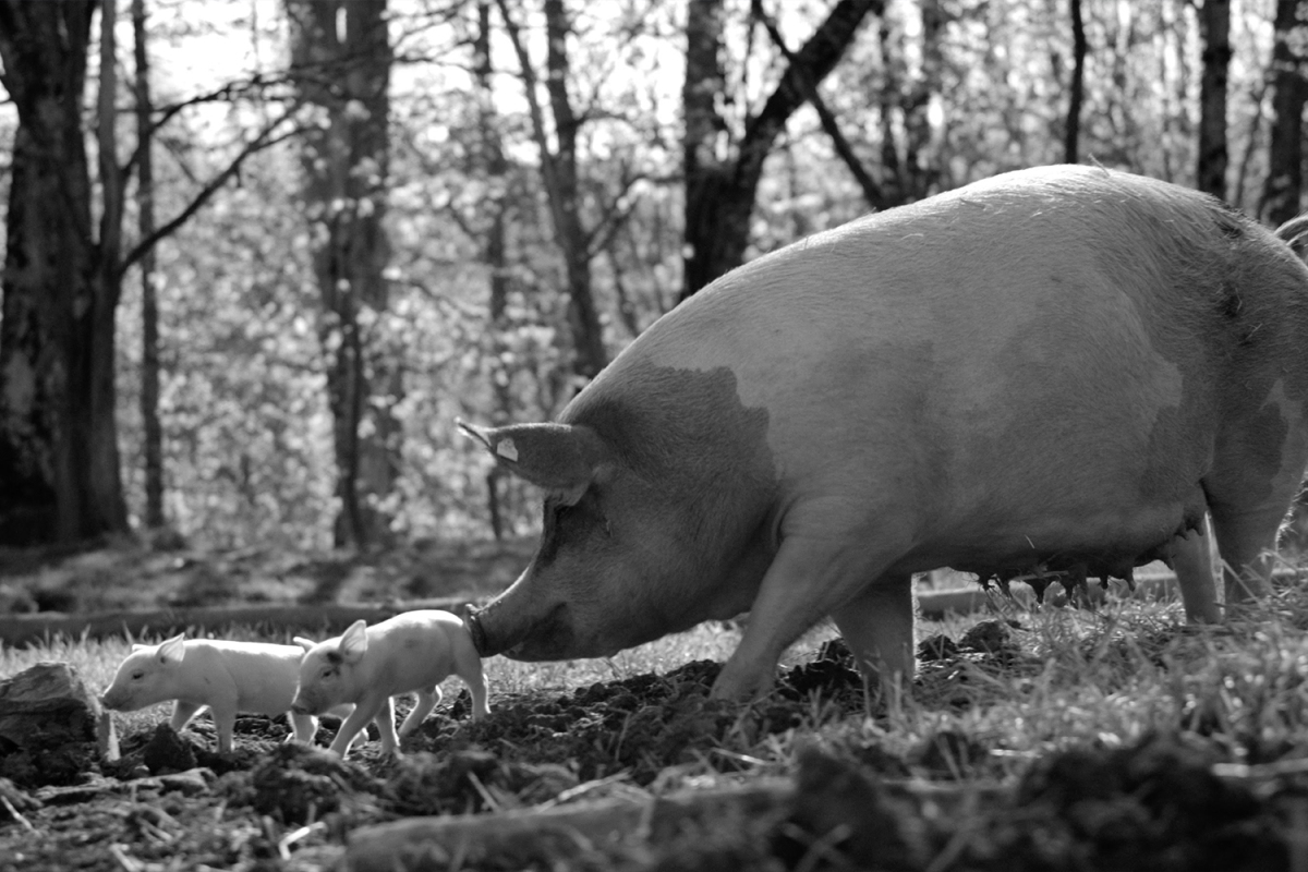 The Most Riveting Film of 2021 Is a Black-and-White Documentary About a Pig