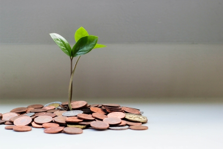 A green plant growing out of a pile of coins