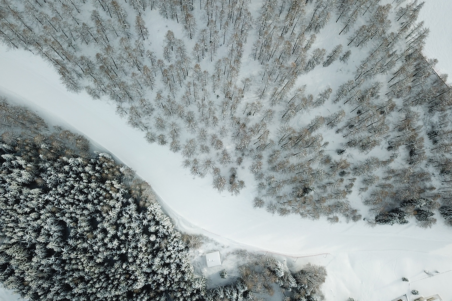 an overhead shot of a snowy scene with trees surrounding a path
