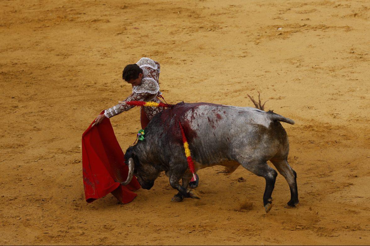A matador performs a pass