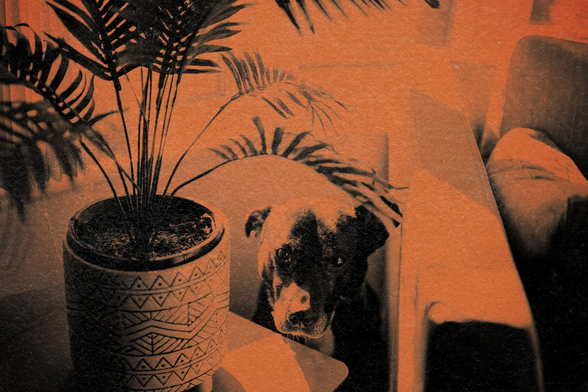 A photo of a shy dog sitting between a chair and a plant in orange and black