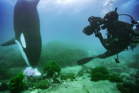 What It's Like to Swim With Killer Whales, The Apex Predator of the Seas