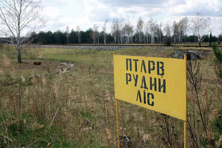 The sign marks the territory of the Red Forest, Kyiv Region, northern Ukraine