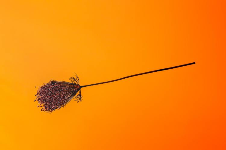 Broom on a yellow and orange background. In German wine regions, a broom above a door signals a pop-up wine bar and restaurant.