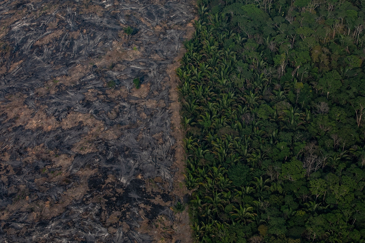 An aerial image of burned Amazon rainforest in the Brazilian state of Rondônia in 2019